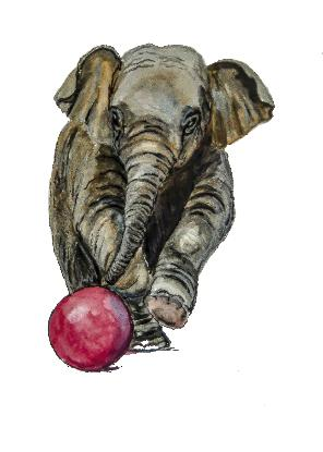 Baby elephant kicking red ball