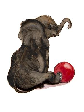 Baby elephant curly trunk with red ball